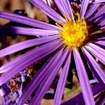 """""""purple flower"""" by knystrom"""