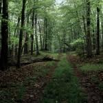 """Tenderfoot  Lake Nature Preserve"" by RichardBaumer"