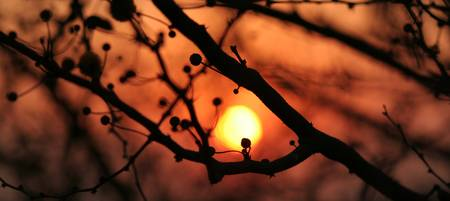 The sun in the tree