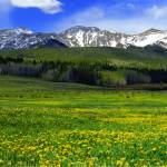 """Golden Mountain Meadow"" by Callahan_Galleries"