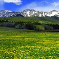 Golden Mountain Meadow
