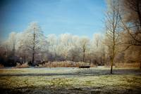 Dutch frozen landscape