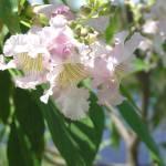 """Flower and Pond"" by ryanamundson1"