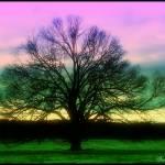 """sunset oak"" by DeniseOBrien"