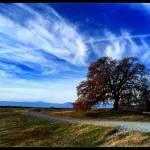 """Oak on  Sunset Hill"" by DeniseOBrien"