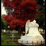 """""""Weeping Angel"""" by DeniseOBrien"""