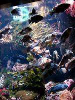 Oregon Coast Aquarium