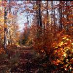 """""""Two Hearted River Forest in the Fall"""" by RichardBaumer"""