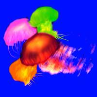 pop art jellyfish