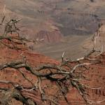 """Grand Canyon (20)"" by BarbaraBerger"