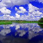 """Myakka State Park"" by ken_mobile_photos"