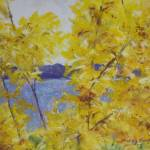 """Forsythia at SML"" by ShelleyKoopmann"