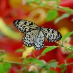 """""""Butterfly"""" by memoriesbyangela"""