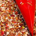 """Capsized Red Canoe on a Sea of Leaves"" by jomiwi"