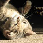 """I Wanna Hug!"" by jyvonne"