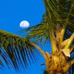 """maui moon"" by sant"