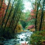 """""""Rock creek in fall"""" by garrykinney"""