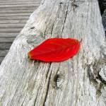 """""""Lone leaf"""" by garrykinney"""