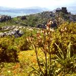 """""""View towards the Crusader Castle, Acrocorinth"""" by PriscillaTurner"""