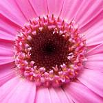 """Pink Flower"" by diavolo_felice"
