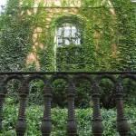 """""""ivy wall"""" by thegoldenbear"""
