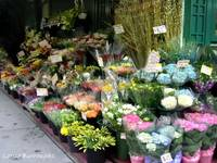 New York City Flower Shop