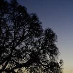 """""""Oak"""" by 007Ben"""
