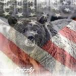 """AMERICAN GRIZZLY"" by redposterboy"