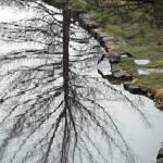 """Goose tree"" by danlward"