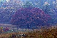 Autumn on Little Round Top