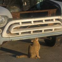 Cat and old truck