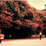 """""""Plaza San Martin"""" by e-nikkos"""