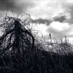 """""""Gathering Storm"""" by PIXELODEON"""