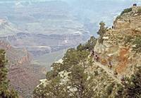 Mule Train, Grand Canyon