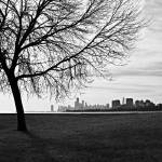 """Tree and Chicago Skyline"" by JosephMLunetto"