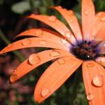 """Drops of Orange"" by Micky"