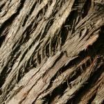 """bark"" by BalancedArt"