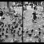 """Diptych: Elle Disperse Les Pigeons"" by patricktpower"