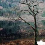 """""""Loch Eck One"""" by MatthewRowe"""