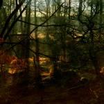"""English Woodland"" by kenart"