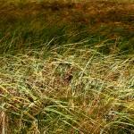 """Sea Grasses"" by kenart"