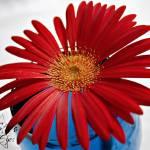 """pick me a flower - edit"" by jessicaerin"