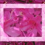 """""""Pretty in Pink Azaleas"""" by ashjoielee"""