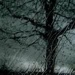 """Tree of Hope"" by Barbara_Stock"