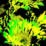 """Sunflowers: Yellow Green 0290"" by vicki-pix"