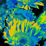 """Sunflowers: Blue Yellow Green 0290"" by vicki-pix"