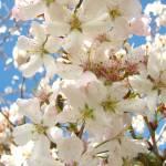 """""""I love Spring"""" by emelia1502"""