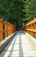 Taneum Creek Trail Bridge  #1