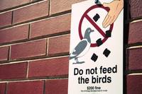 do not feed the birds mini-toasts