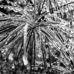 """Winter Storm"" by louisdallara"